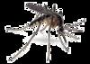 Mosquito Taxonomic Inventory